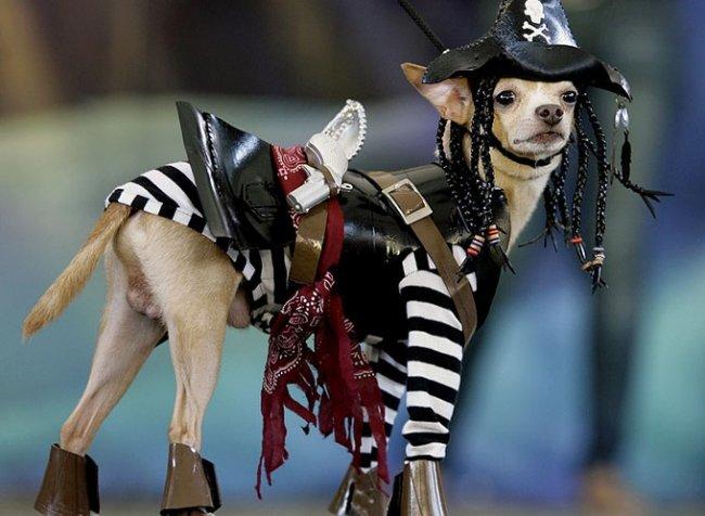 Парад собачьих нарядов (15 фото)