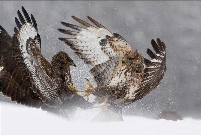 Лучшие фотографии природы (18 фото)