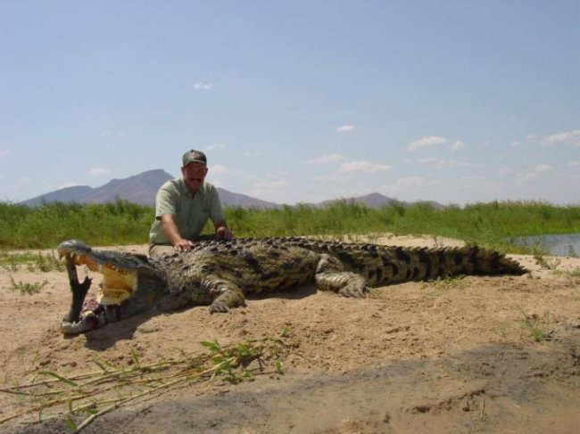 ЖЕСТЬ ДНЯ! Кого нашли в животе крокодила (6 фото)