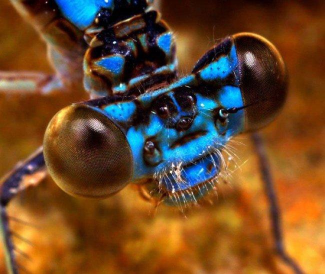 Макрофото насекомых (25 фото)