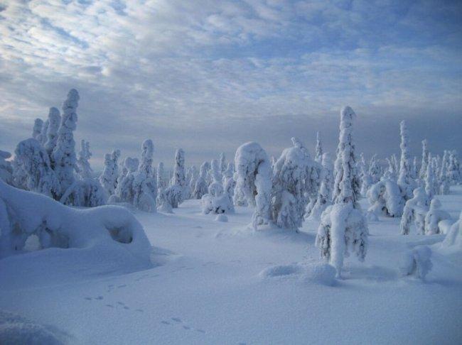 Лапландия (9 фото)