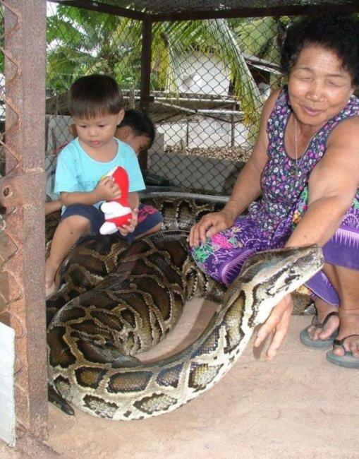 Домашняя змейка (5 фото)