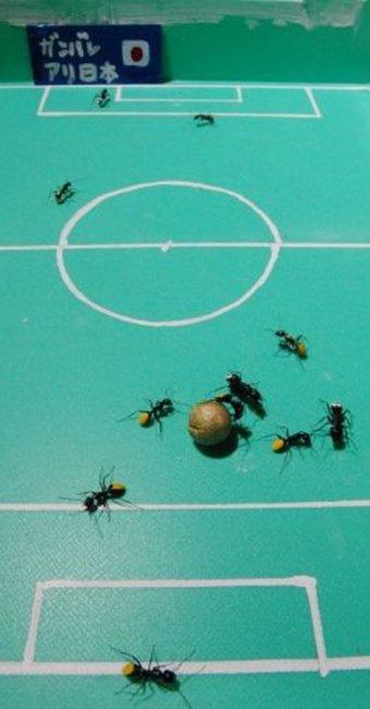 Футбол и муравьи (7 фото)